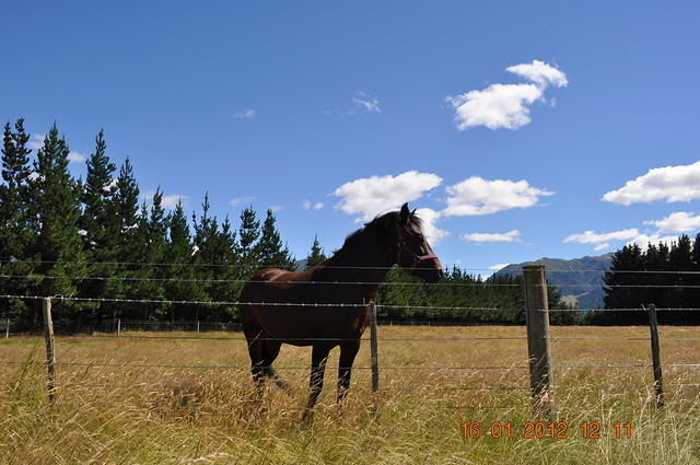 Beautiful Horse - Photographed By Jennifer Burroughs. burroughsdesign.co.nz
