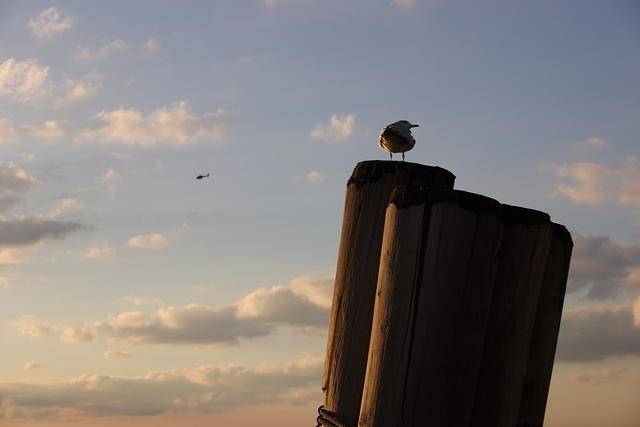 Seagull on a Mooring Post at Sunset