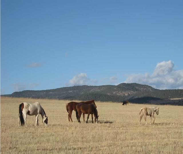 caballos - horses in a pasture