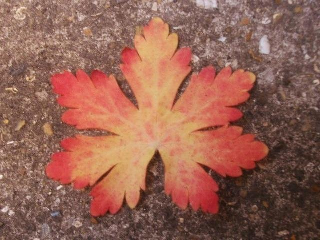 Pretty leaf with red edging