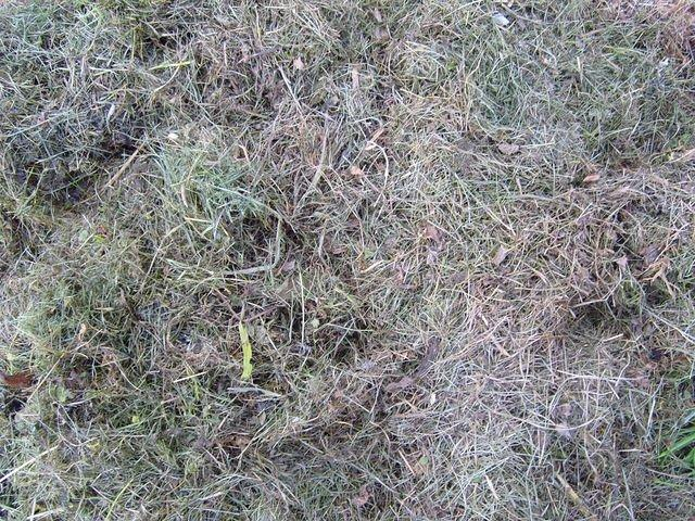 old_cutted_grass_TT7010117.JPG
