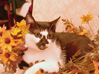 Autumn_Flowers_Kitty_Bill_Jacobus
