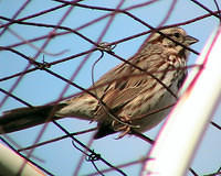 Bird On Wire Fence