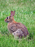 Rabbit-June5,2006-IMG_0075