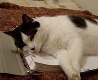 white cat with black spots napping on homework.