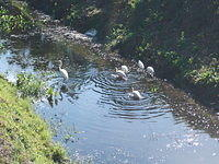 Some water fowl in a gully.