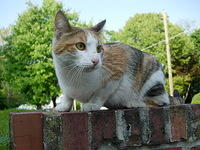 maryland-stray-cat-2005