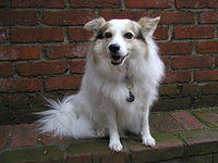 white_dog_on_bricks