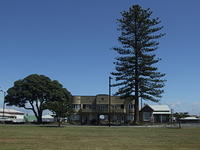 Art Deco flats with Norfolk Pine, Napier, New Zealand