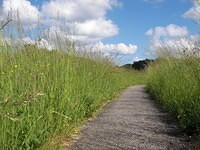 Narrow path, tall grass and clouds