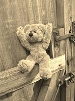 teddy (stuffed) bear) on an old wooden gate