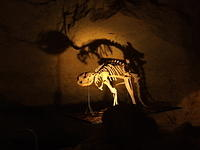 Cave Skeleton (Naracoorte, South Australia)
