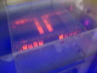 Gel electrophoresis in UV light