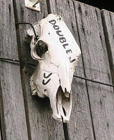 Bone-Headed Sign