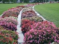 walkway in flowers