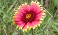 Wildflower_Bill_Jacobus