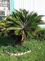 palm_tree_small.jpg
