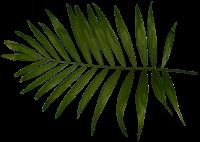Fern and Palm leaves