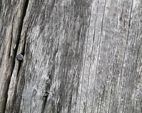old wood with nail