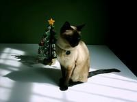 one of my cats - this one is Diesel, all set for Xmas