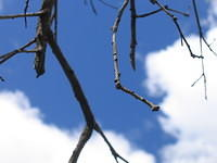 sticks_and_clouds
