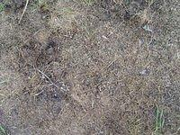 old_cutted_grass_TT7010118.JPG